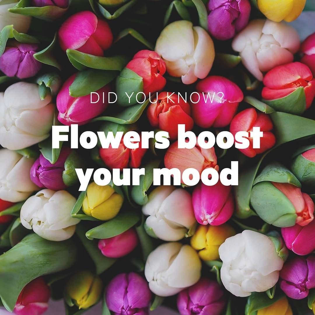 Go get yourself a bouquet itull help put a smile on your face