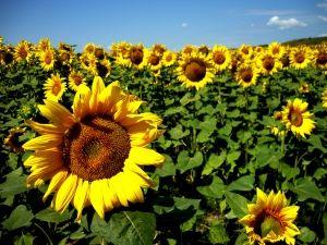 É primavera! Semeie flores no coração para colher flores! Seja como a flor, que exala perfume para a mão que a esmaga!  http://www.armandoakio.blogspot.com.br/2012/09/e-primavera-semeie-flores-no-coracao.html