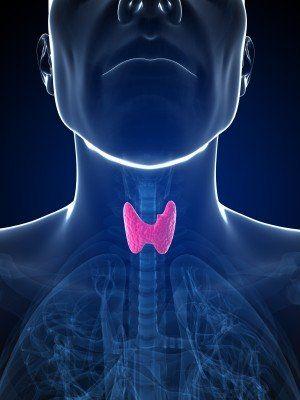 Antinutrientes: Sustancias antitiroideas   Glándula tiroides ...