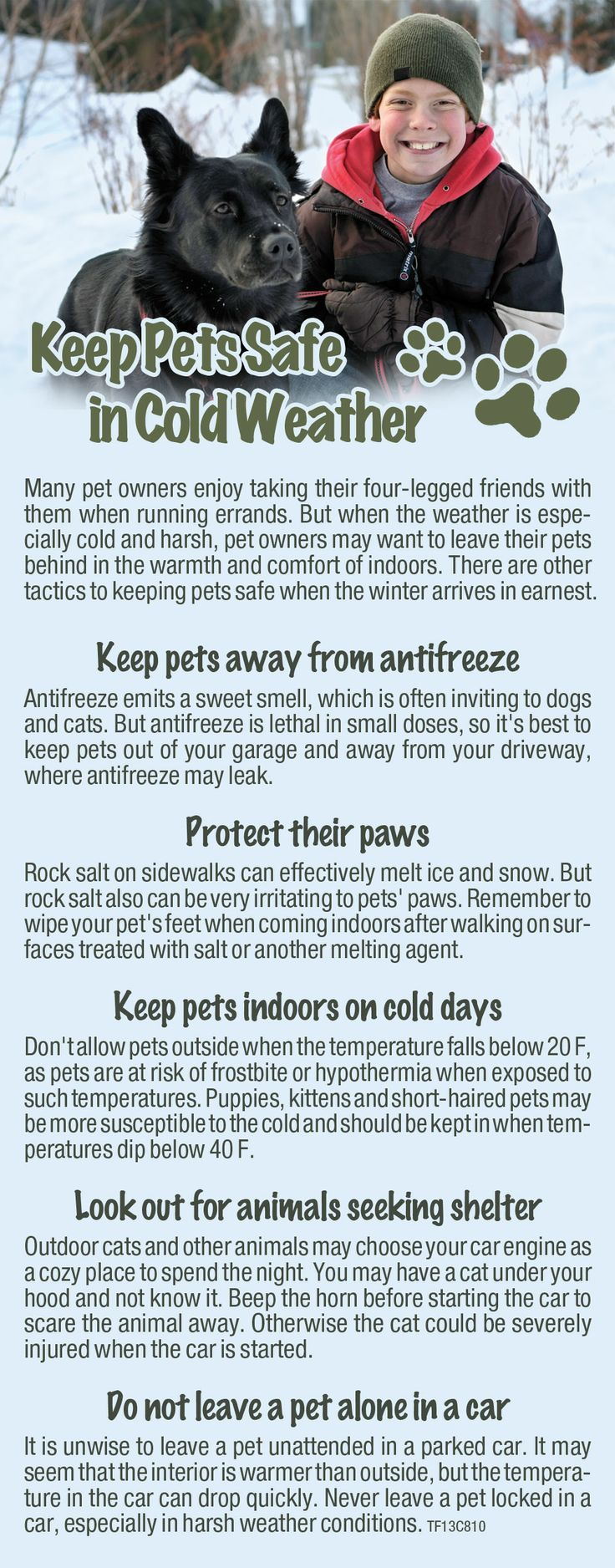 Don't about Pets in this cold weather outbreak