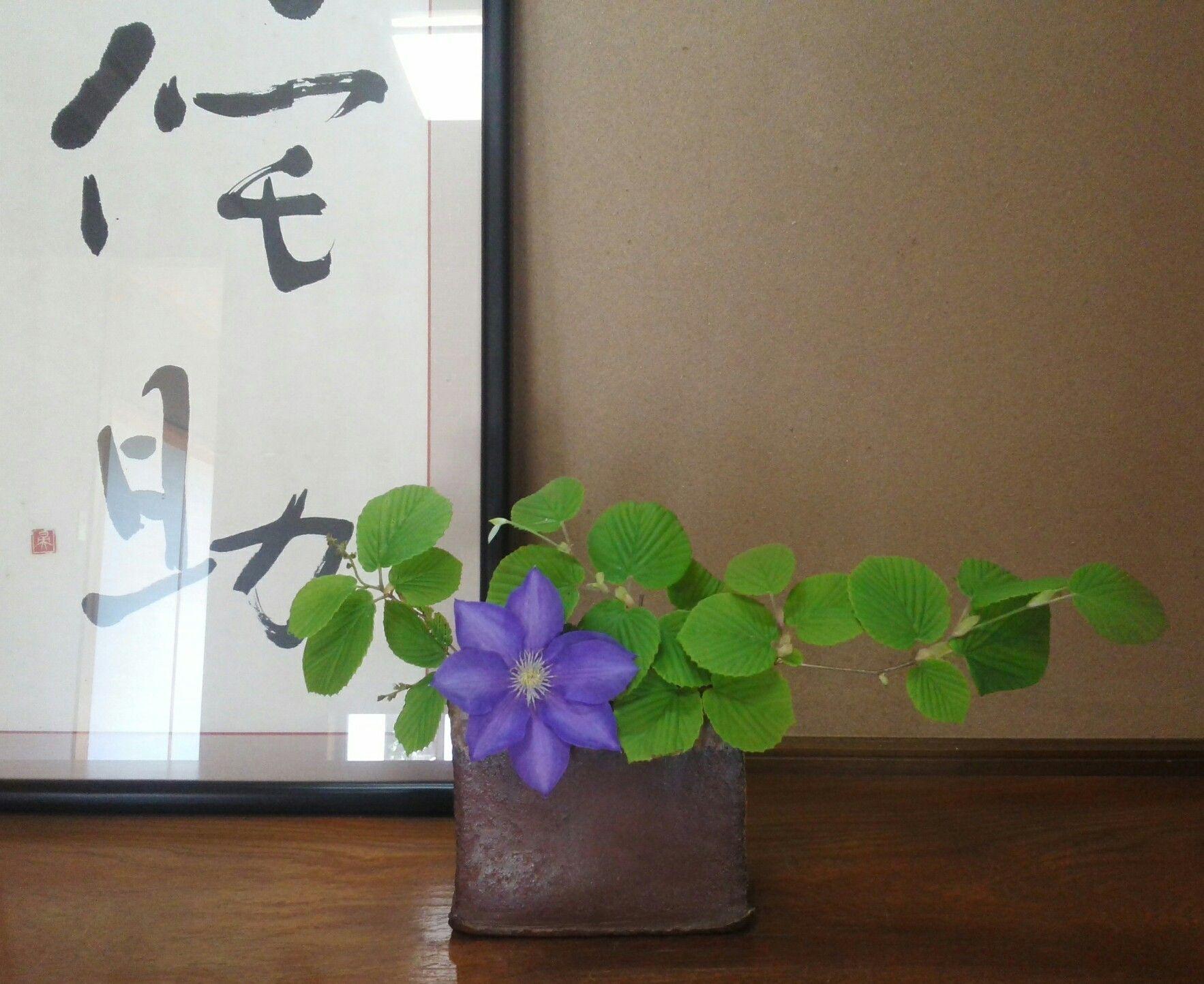 今年もお義母さんが大事に育てている鉢植えのクレマチスから花一輪いただいて生けました土佐水木と…風が吹くとクルクルまわりだしそうなクレマチス花びらに見えるけ...