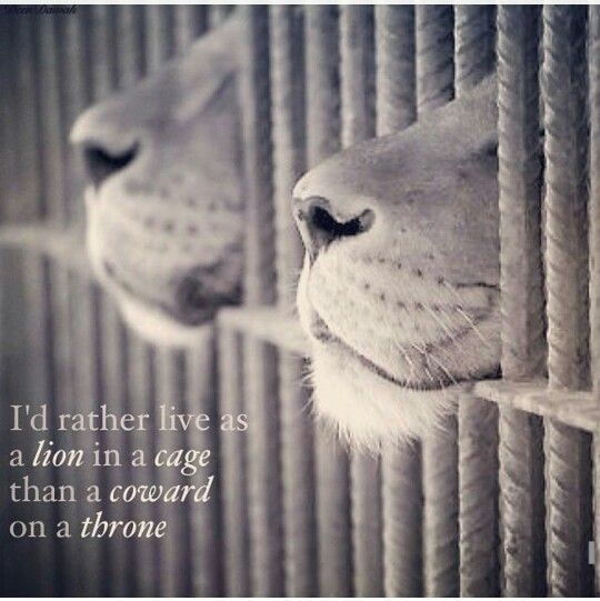 I'd rather live as a lion in a cage than a coward on a throne.