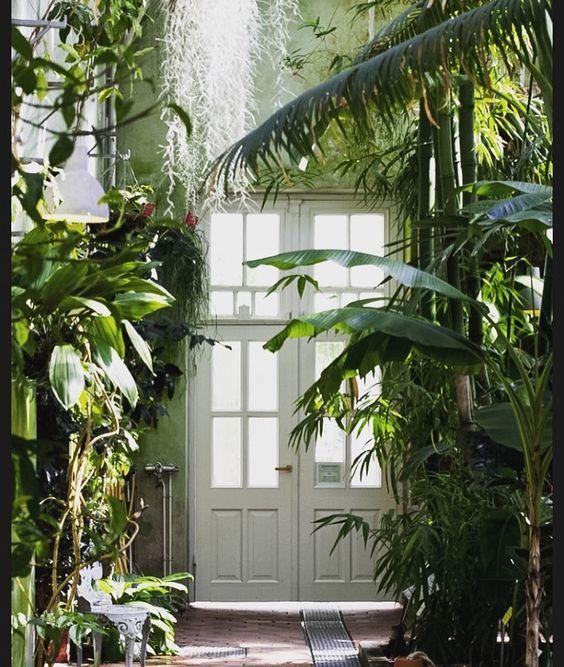 6 Paquets De Mouchoirs Plantes Jardin D Hiver Jardins Et