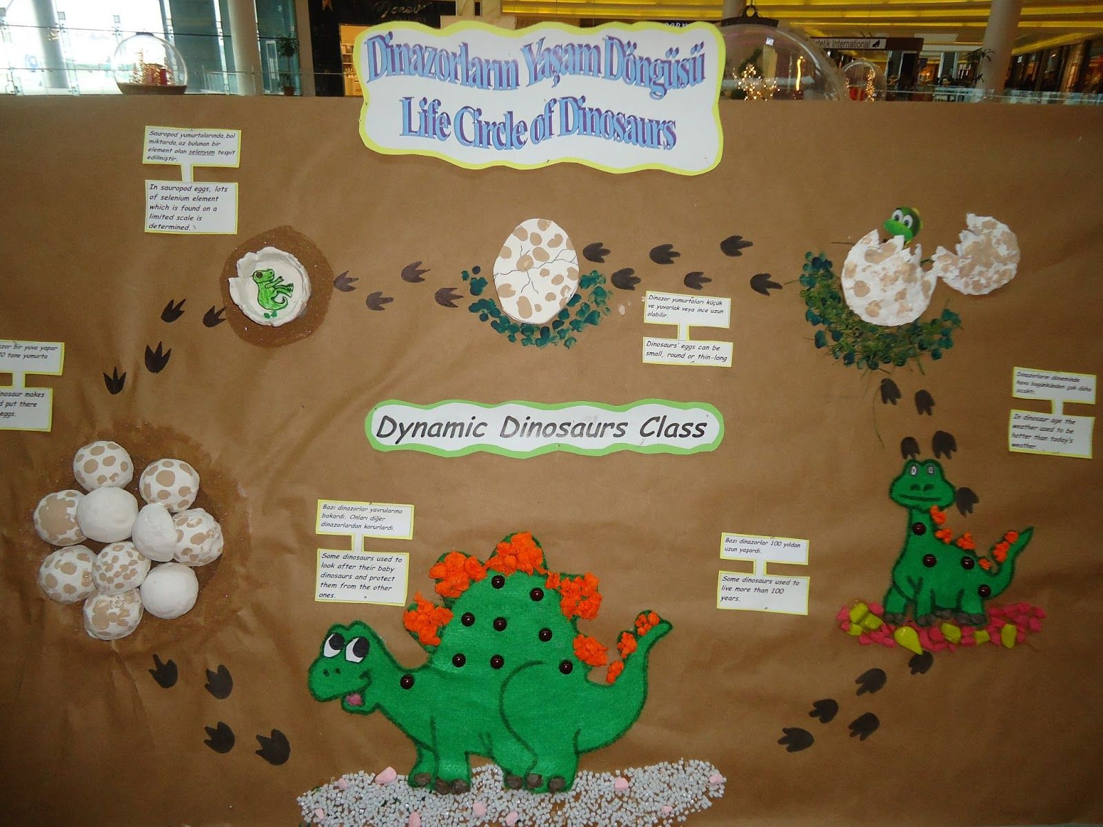 Life Of Cycle Animals Craft Idea For Kids