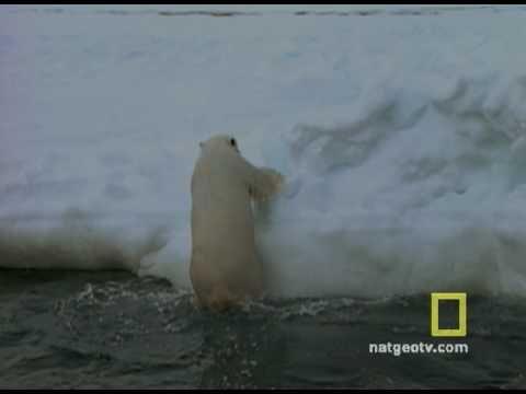 Exploring Oceans: Arctic - YouTube