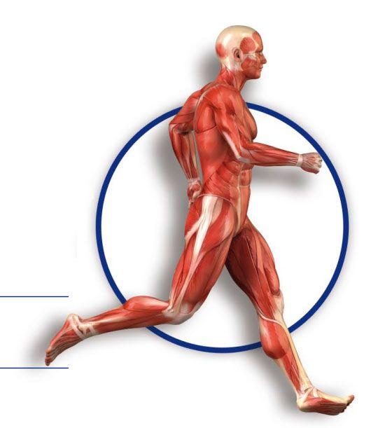 para hacer un libro pop-up sobre Anatomía - juego Recortable de la figura humana: músculos, articulaciones y huesos