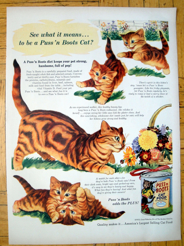 Pin On Cat Cartoons