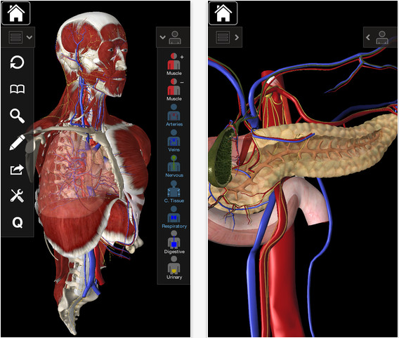 Essential Anatomy 2 help you learn human anatomy directly on your ...