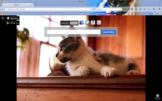 Best Kitten Chrome Themes And Cat Desktop Wallpapers Kitten Cat Lovers Kittens Cutest