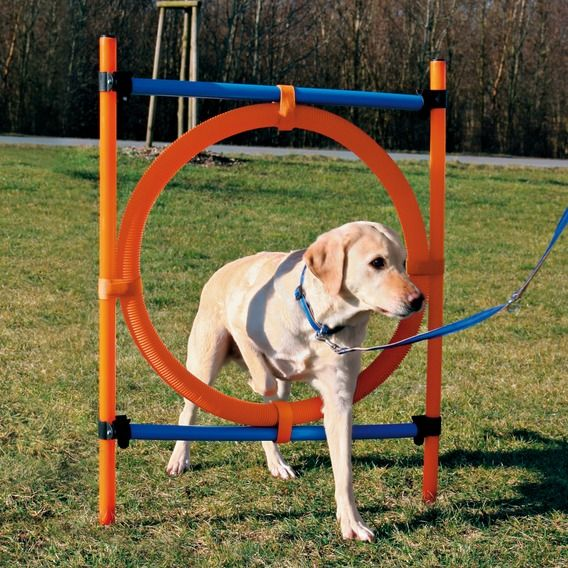 Dog Agility Equipment Dog Agility Equipment Dog Training Tyre Jump Agility Training For Dogs Dog Agility Dog Training