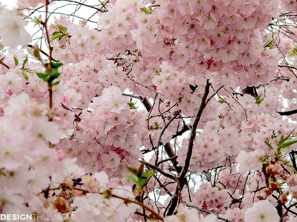 Cherry Blossom Decor How These Branches Inspire Spring Table Settings In 2020 Cherry Blossom Decor Spring Table Settings Cherry Blossom