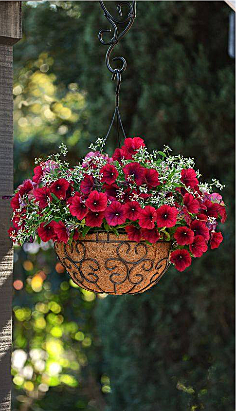 Pin By Mary Desalvo On ɠarden ℂharm Hanging Basket Garden