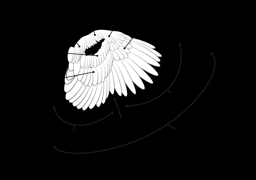 Covert feather - Wikipedia, the free encyclopedia   Bird Anatomy ...
