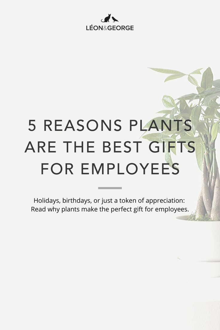 Why Potted Plants Make the Best Employee Gifts — La Résidence · Plant Care Tips and More