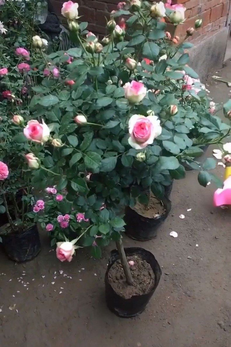 41 Cute Fairy Garden Design Ideas That Will Make You Feel Better : solnet-sy.com