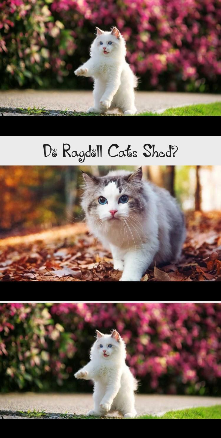 My Blog En Blog in 2020 Cat shedding, Cat groomer