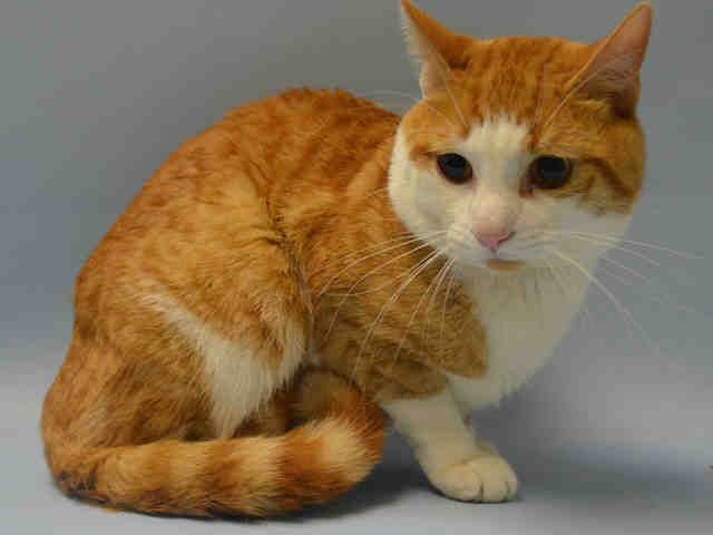 Ducky A1042356 Brooklyn To Be Destroyed 07 15 15 Purrfect Pair Of Cat Help Animals Friends Saving Cat