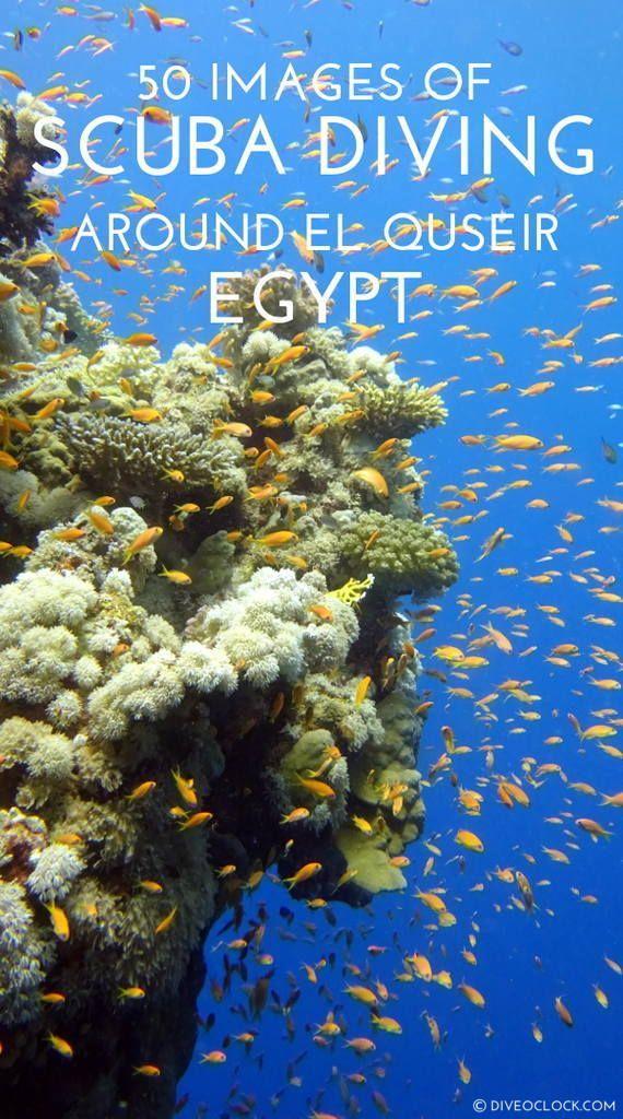 50 Images Of SCUBA Diving Around El Quseir, Marsa Alam