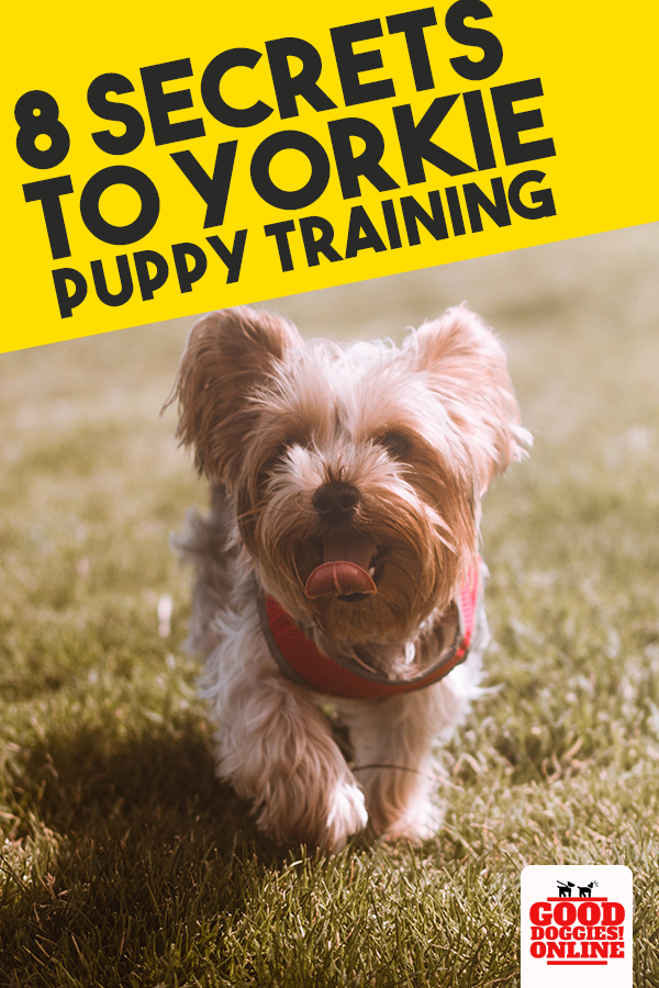 Do you own a Yorkie? If so here are some Yorkie training secrets that will help you train your Yorkie whether it's crate training or tricks. #gooddoggies #dogs #puppy #training #dogowner #yorkie #YorkshireTerriers #pets #dogtraining