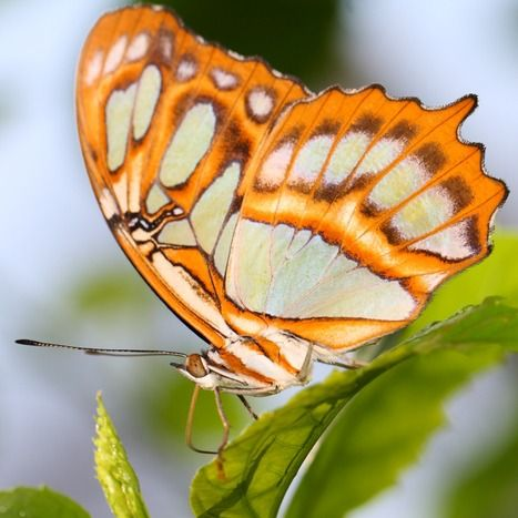 Butterfly proboscis in action ~ http://ourbeautifulworldanduniverse.com/butterfly-proboscis.html