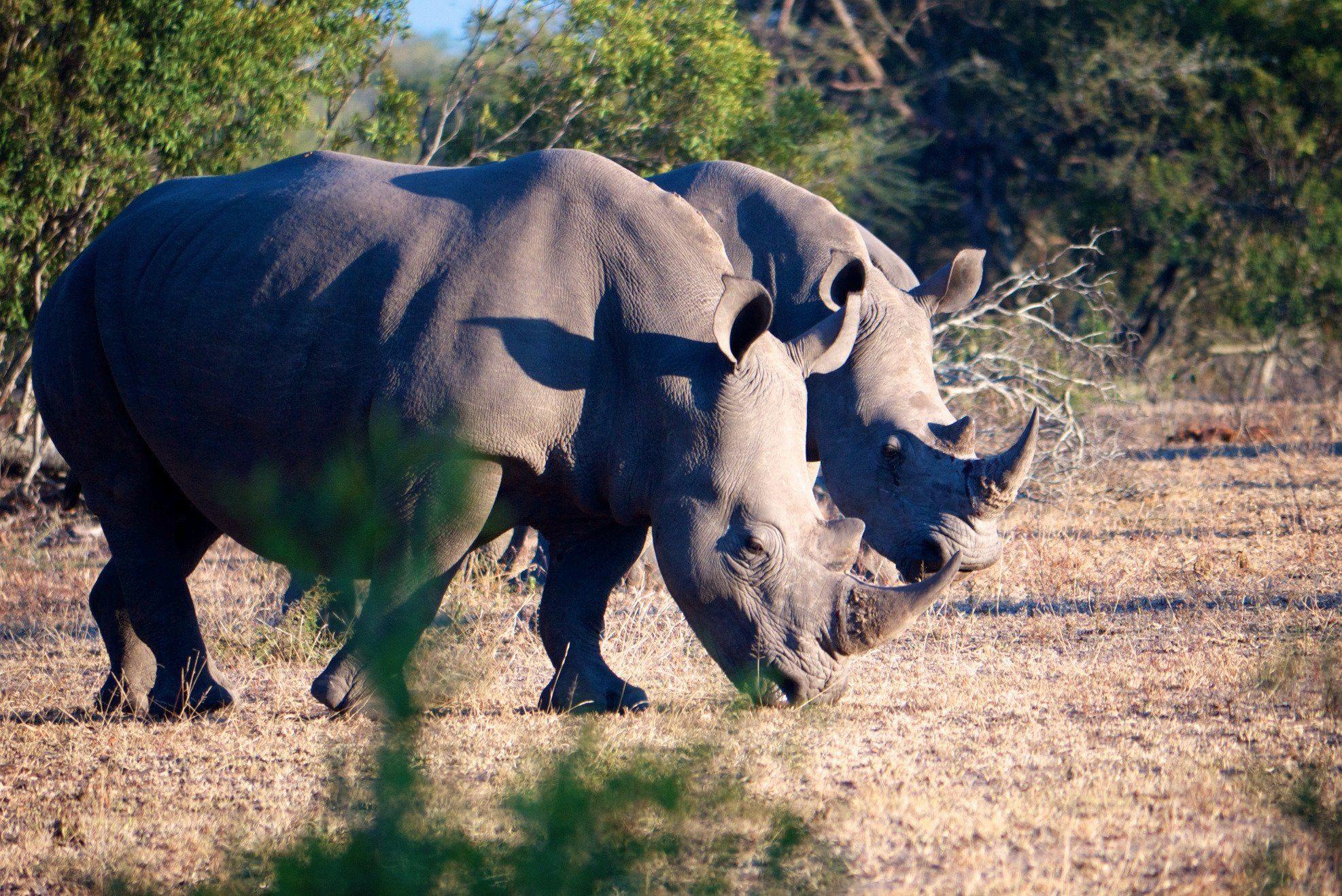 Notten's Bush Camp (South Africa/Sabi Sand Game Reserve) - Lodge