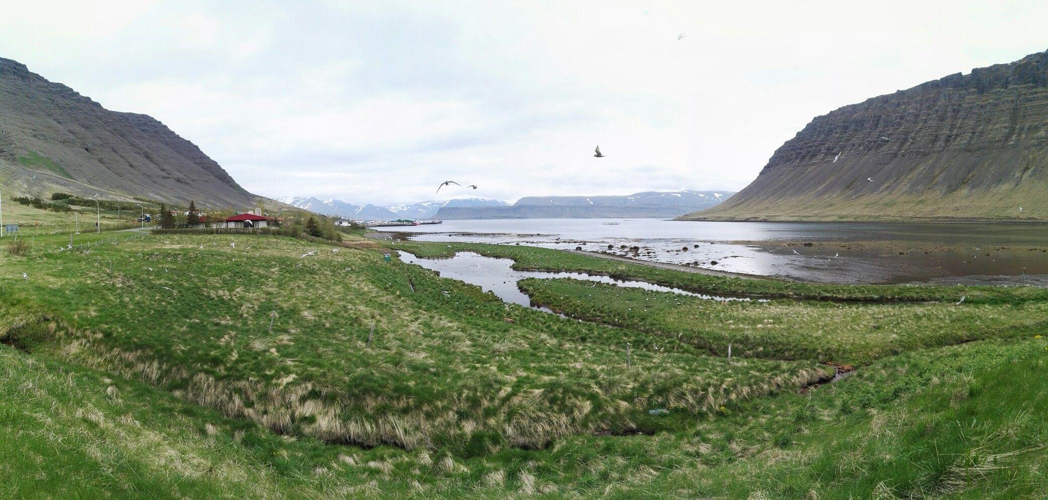 - schwalben, Iceland -