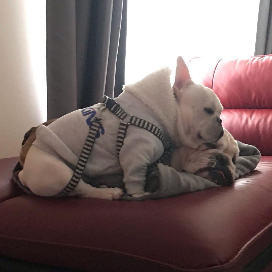 あんまり写ってなくてごめんよコロチ ねーちゃん塾友と遊びに行っちゃって にーちゃん塾だし あー暇暇暇暇 だからアイス食べてるエチオピアモカコーヒーにはまってます Bulldog Bulldogs ブルドッグ ブルドッ In 2020 Bulldog Animals French Bulldog