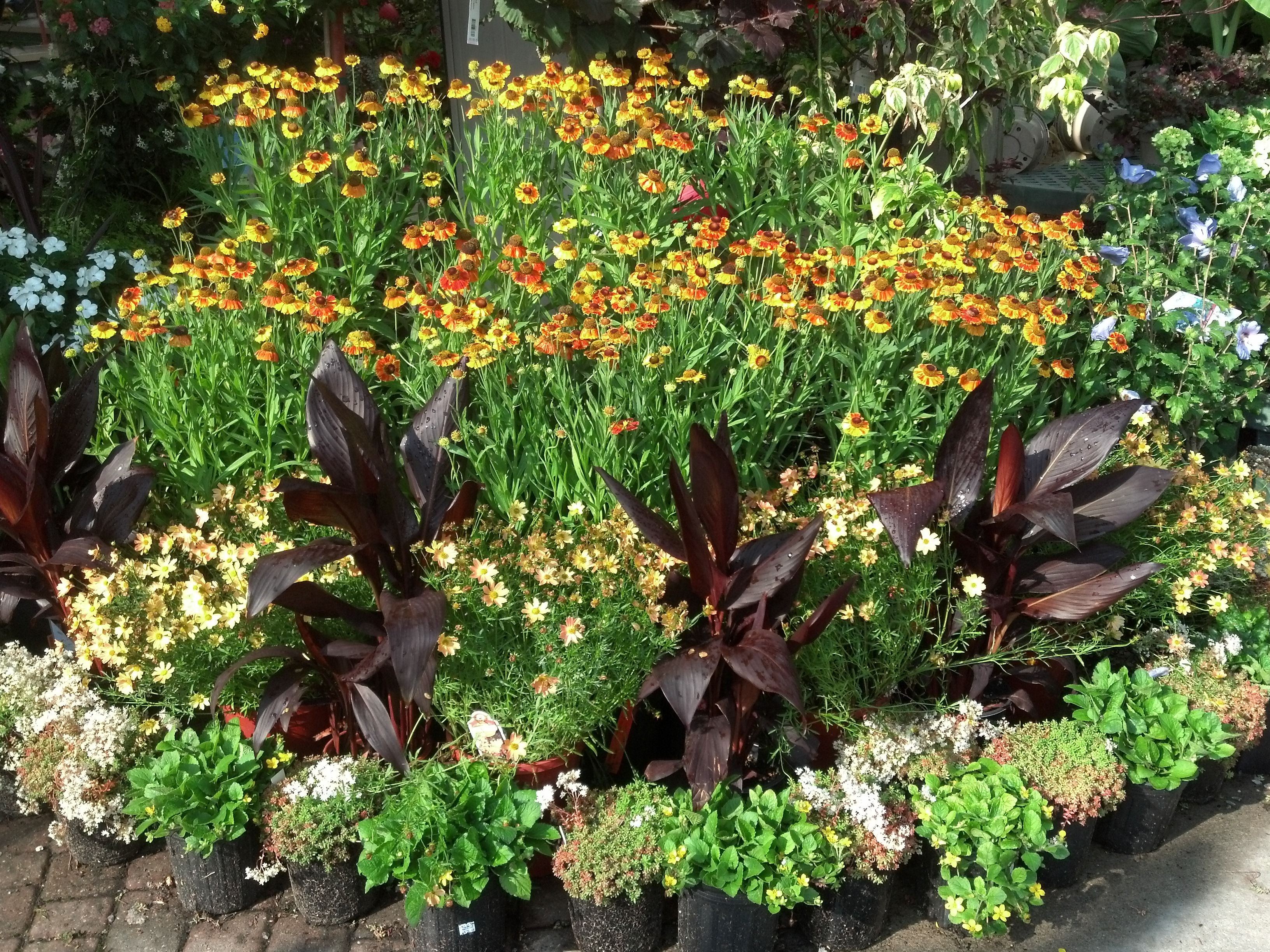 At Bremec Garden Centers We Will Show You How To Make Your Garden Pop!