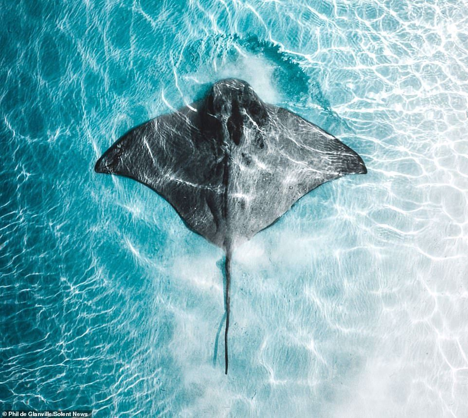 Photos show stingrays and sharks hunting in crystalclear