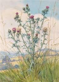 margaret tarrant flower fairies - Google Search