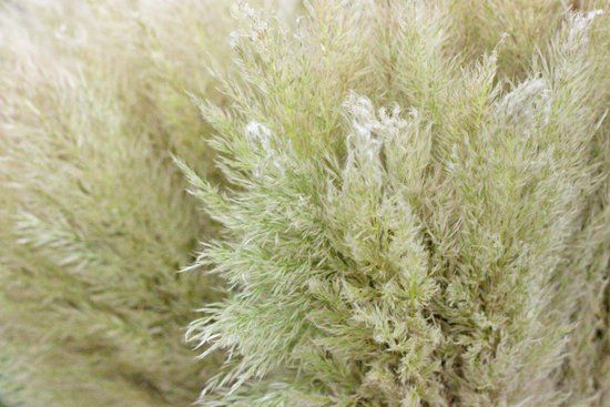 Image result for pampas grass covent garden