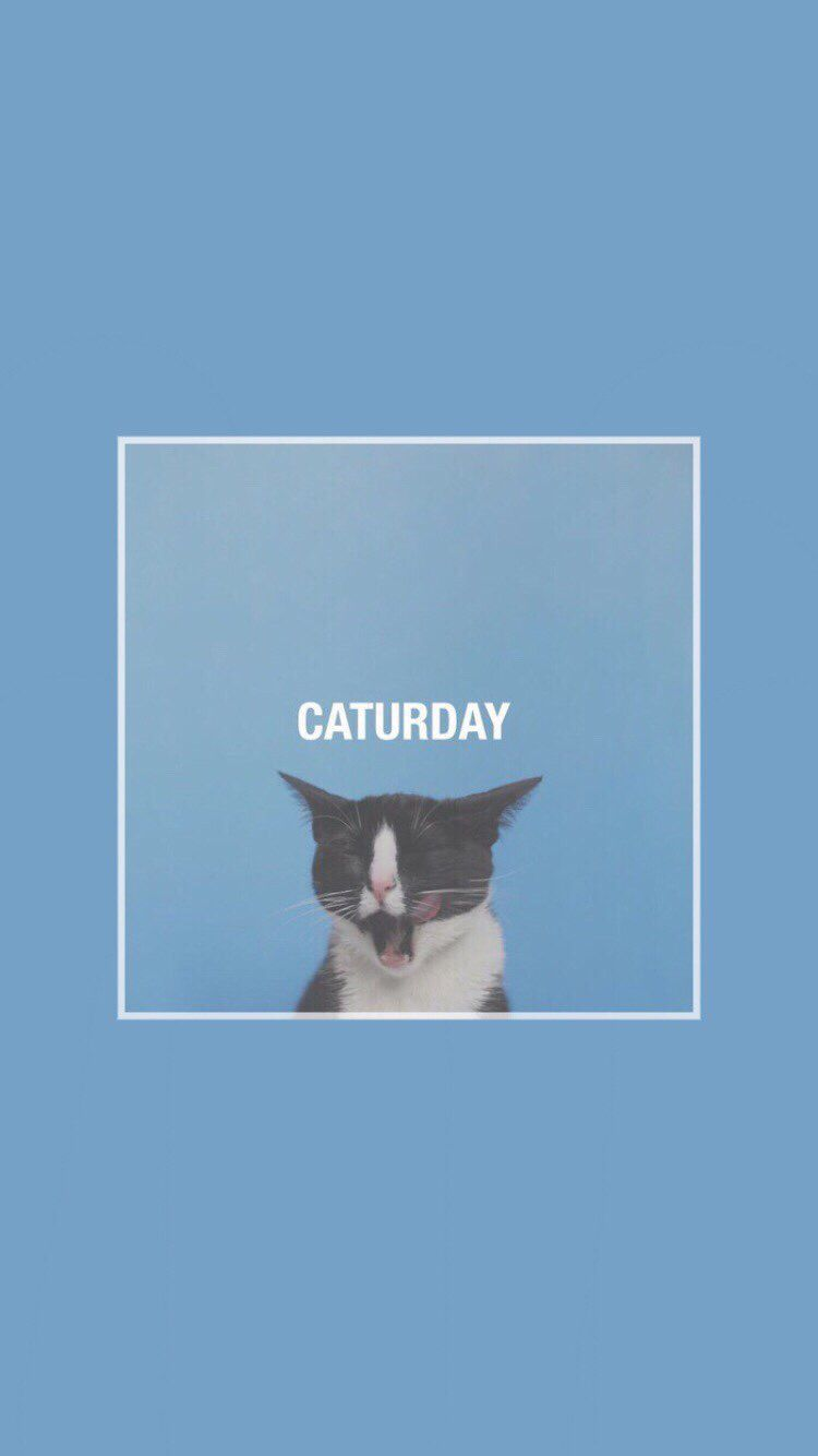 Every day is a caturday aesthetic in pinterest wallpaper