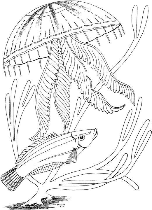 medusa-tratando-de-picar-un-pez-dibujos-para-colorear.jpg (521×720 ...