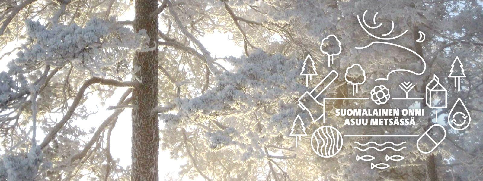 Suomalainen onni asuu metsässä -teema kertoo metsien merkityksestä satavuotiaassa Suomessa – ja sen tulevaisuudessa. Metsäyhdistys etsii teeman kunniaksi 100 syytä mennä metsään. Myös Mets�