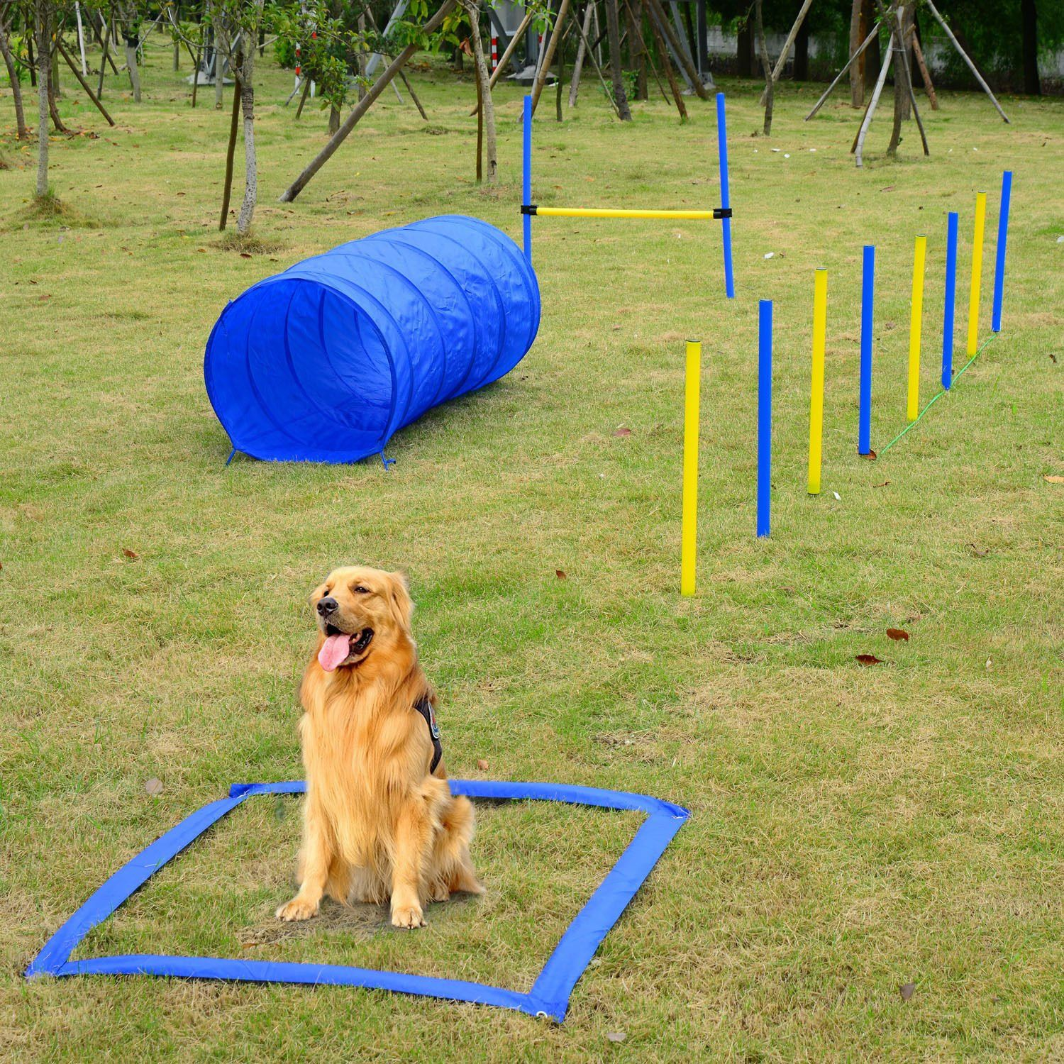 Festnight Outdoor Dog Obstacle Agility Training Exercise Equipment