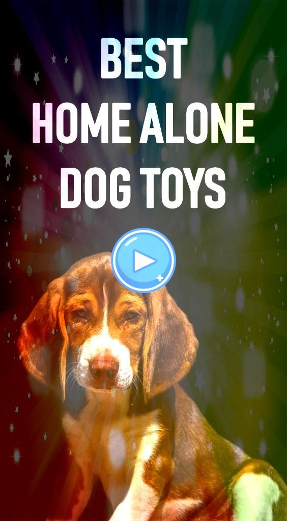 Home Alone Dog Toys To Keep Your Dog Busy While At Work Made from foodgrade TPR rubber materials non toxic environmental friendly safe and harmless to your love pet Watch...