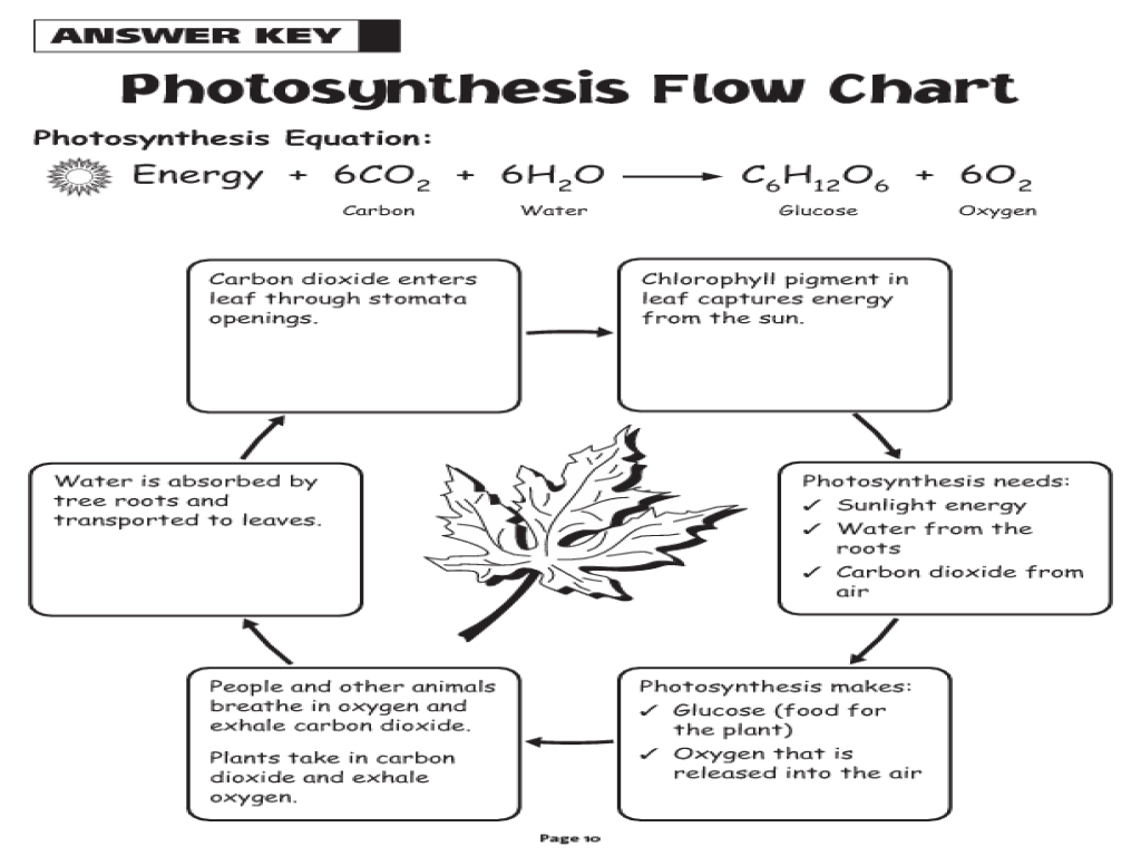 Photosynthesis Flow Chart Module 9