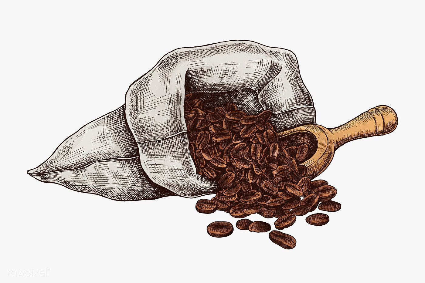 Hand drawn coffee beans in a bag premium image by