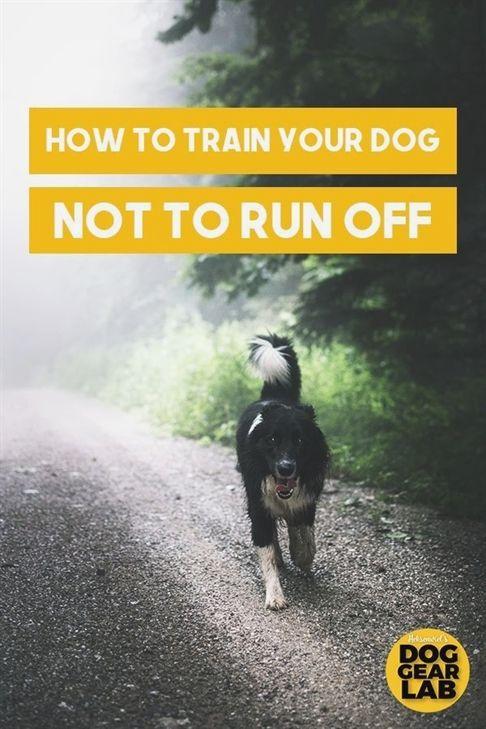 Hunting Dog Training Dog Training Recall Exercises German