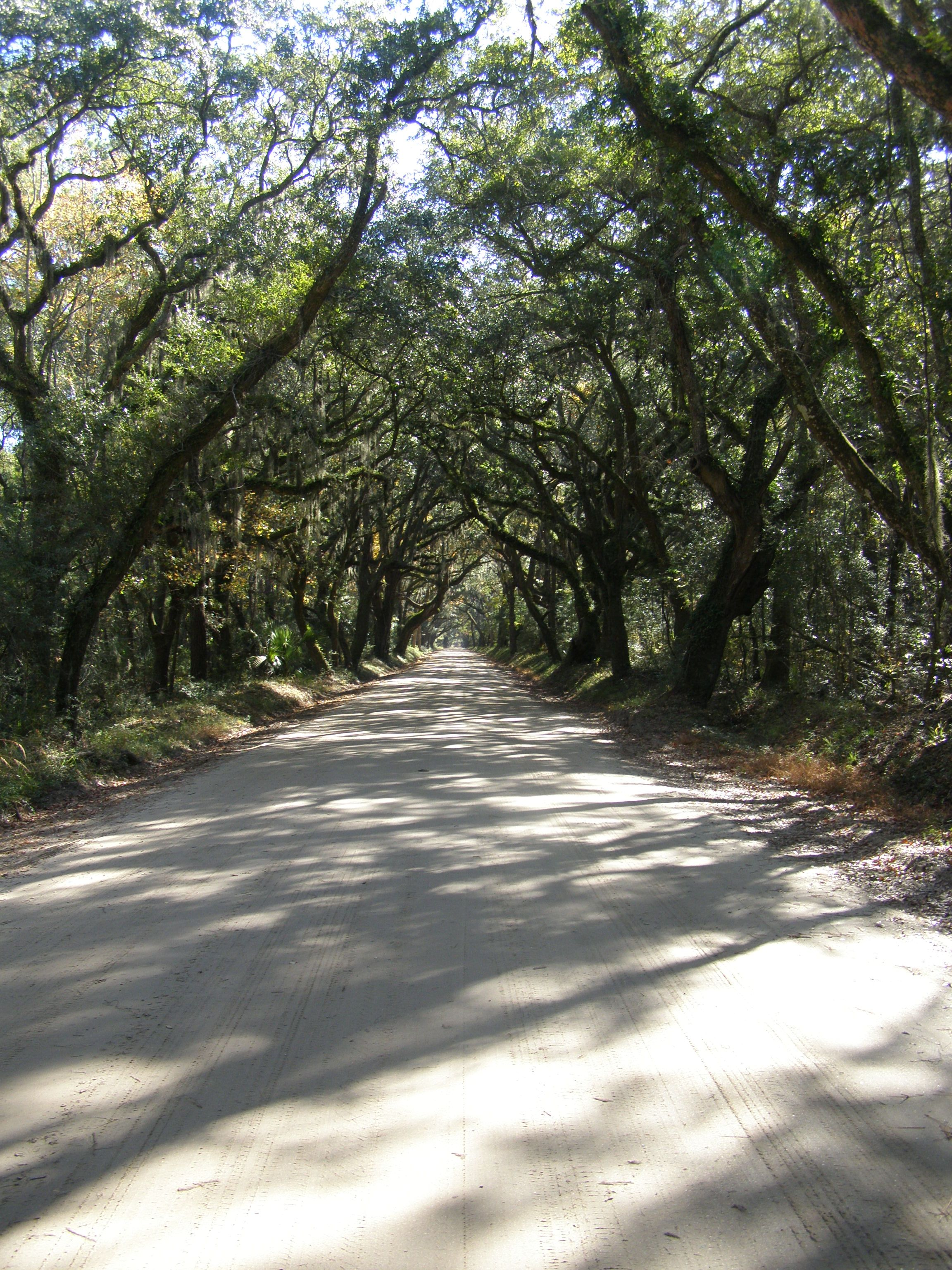 Botany Bay Road, Edisto Beach, SC