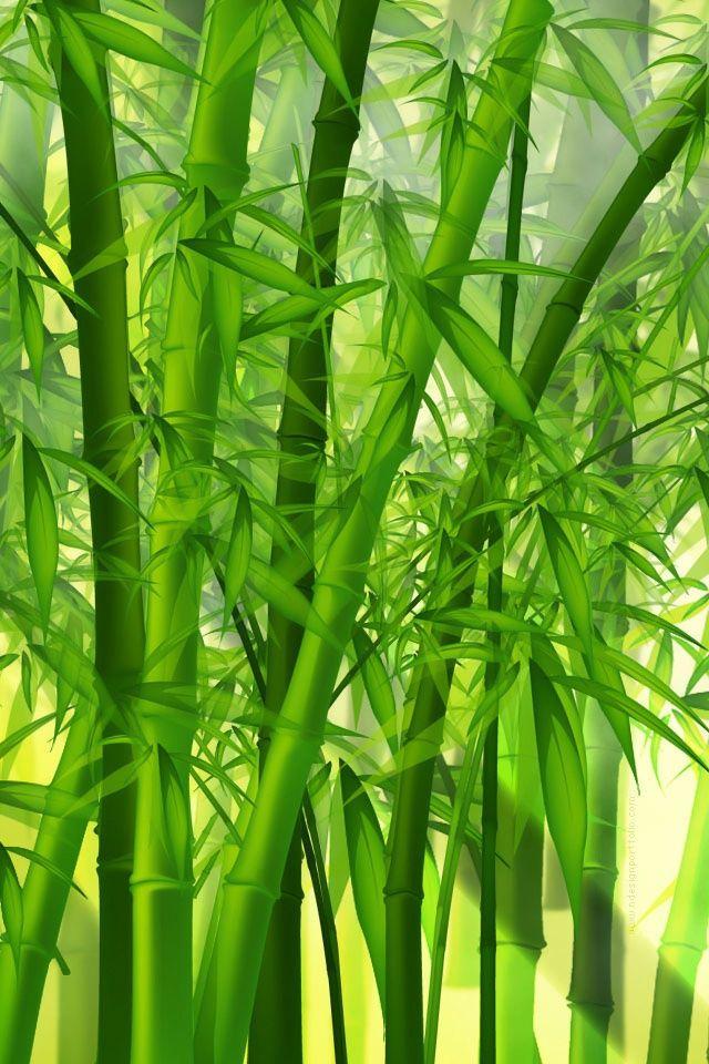 Green Bamboo Bamboo Wallpaper Bamboo Background Nature Wallpaper