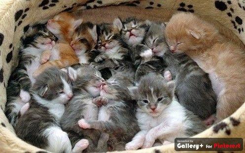 kittyful bed of cuteness