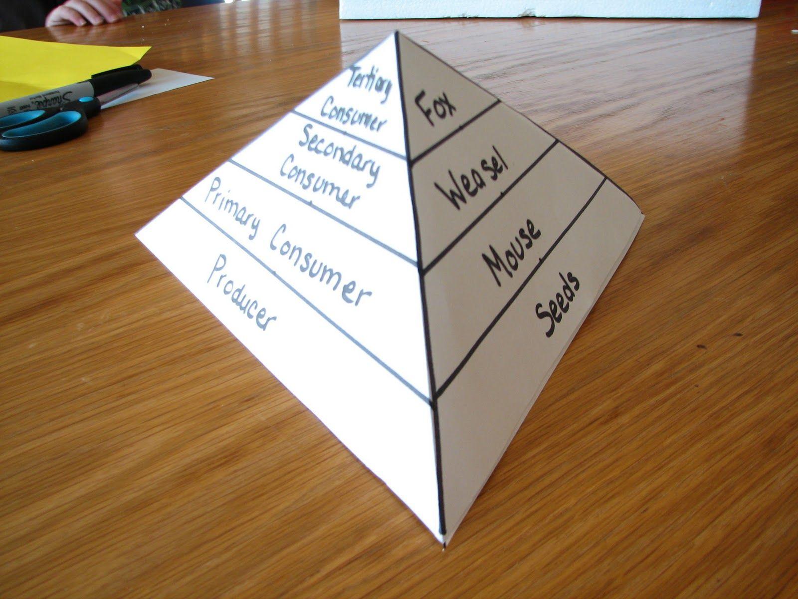 Food Chain To Food Pyramid
