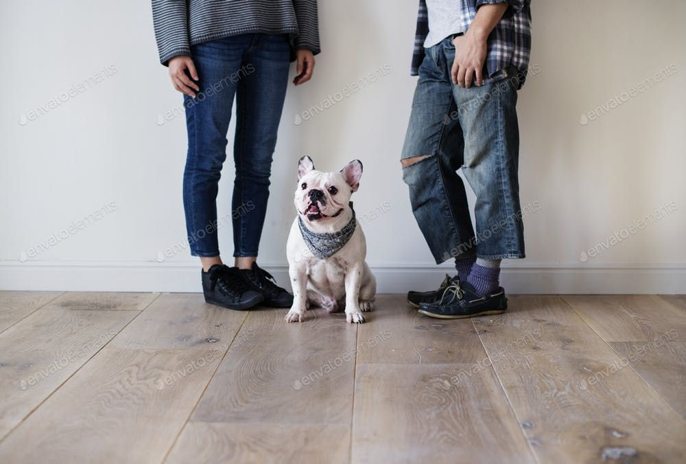 Asian Couple With French Bulldog By Rawpixel S Photos Ad Ad