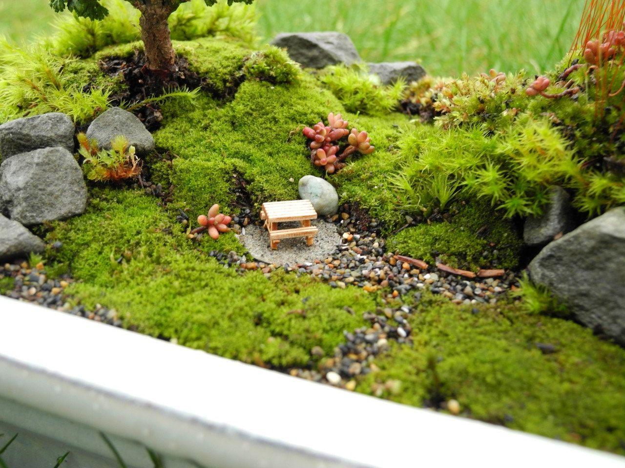 Live Moss For Miniature Gardens Moss Garden Terrariums Fairy