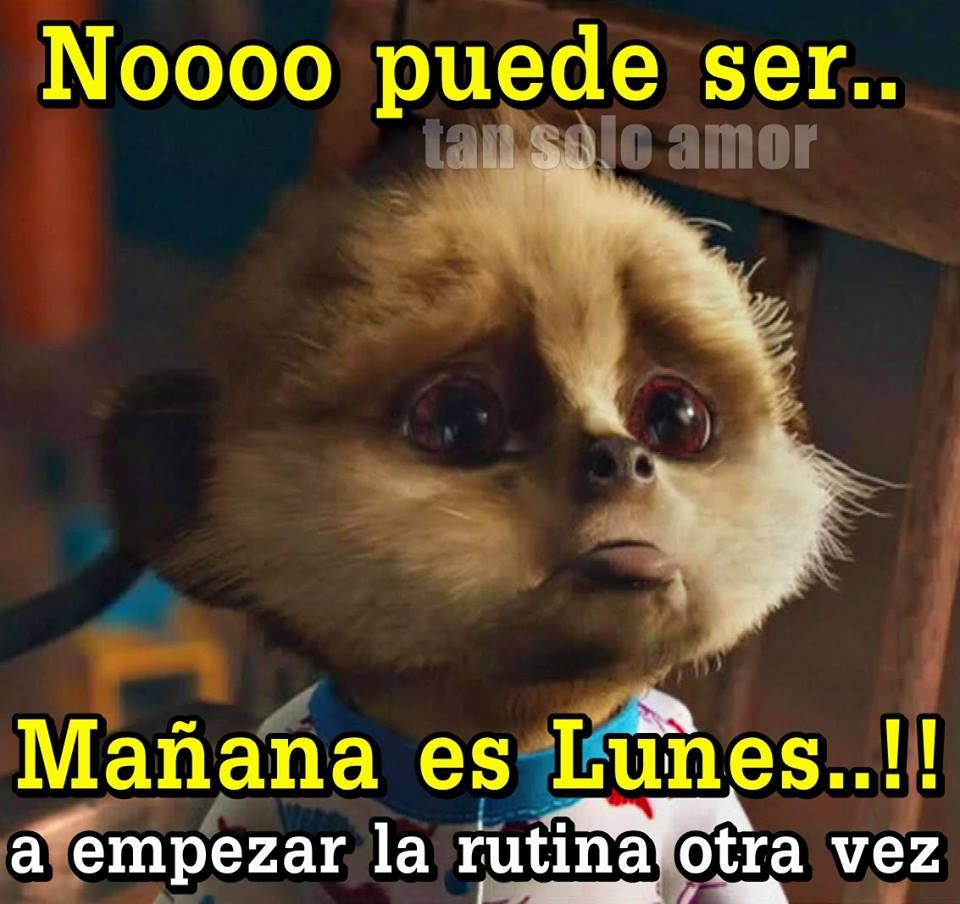 63 Manana Es Lunes Imagenes Fotos Y Gifs Para Compartir Amazing Animal Pictures Animal Antics Funny Cute