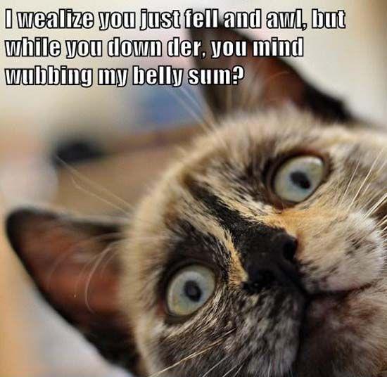 Funny Cat Meme Tumblr : Funny cat meme memes pinterest and