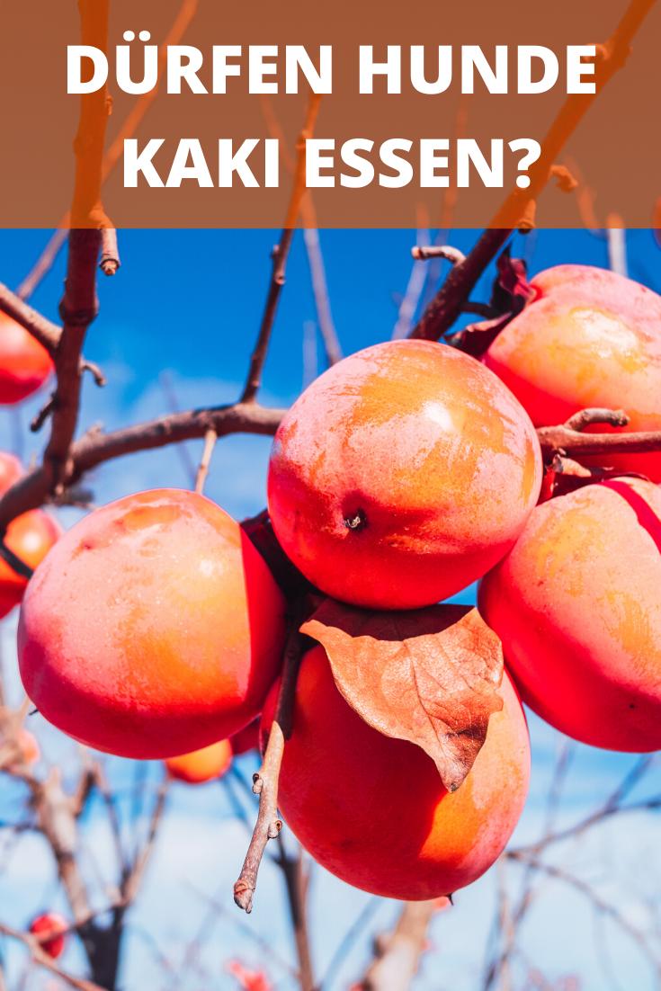 Durfen Hunde Kaki Essen Frucht Ist Weder Giftig Noch Gesund Dogco De In 2020 Kaki Kaki Frucht Fruchte