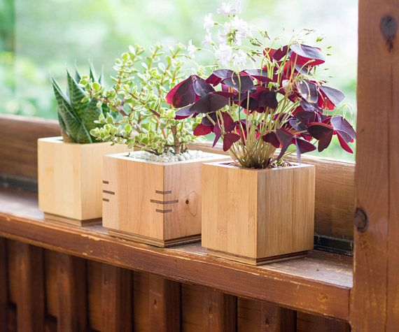 Wooden Planter Box Square Planter Succulent Planter Maple Wood Planter Desk Accessory Wood