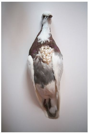 Kelly McKallum, Untitled,( detail) 2007  detail of a larger piece including 5 birds Medium: taxidermy pigeon, pearls